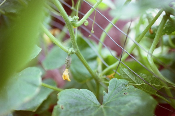 Garden007