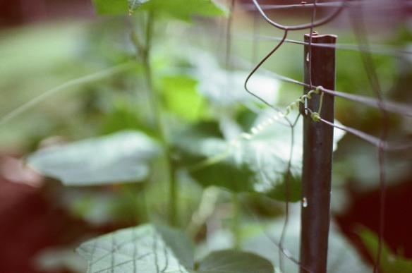 Garden008