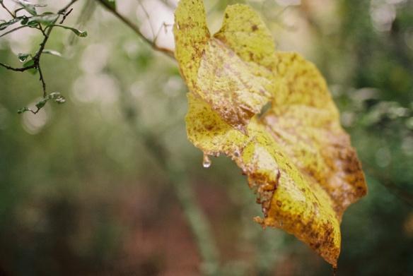 Rain Film07